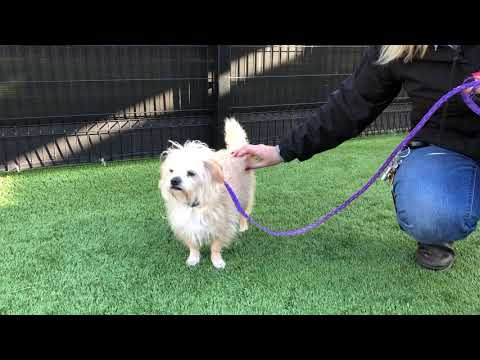 Introduction to Derby (Cairn Terrier Mix) - 2/5/19