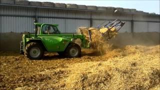 Great Britain - agriculture (pig farm)