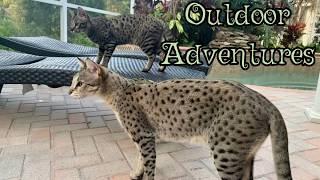 CUTE CATS KUMBA, TAJ, AND ZARA AND THEIR OUTDOOR ADVENTURES