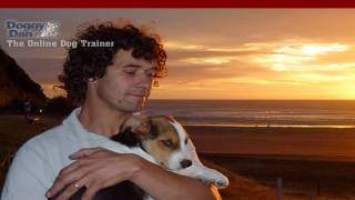 How to House Train Your Dog, How To Potty Train a Puppy, Potty Training Puppy