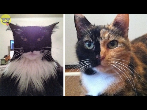 Animals With Unusual Fur Markings You Won't Believe Exist