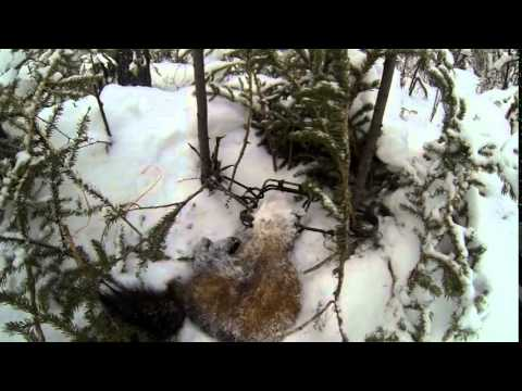 Trapline in Northern Canada Hay River N.W.T. with a Gopro