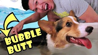 DO CORGI DOG BUTTS FLOAT?! - Life After College: Ep. 473 thumbnail