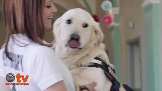 Aslan, la pet therapy fatta col cuore Atuttacoda 2017