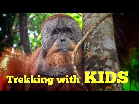 Family Travel in Indonesia: Bukit Lawang