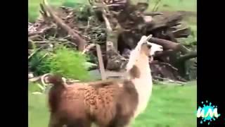 Чокнутые Животные!! Кто кого? Животные против людей