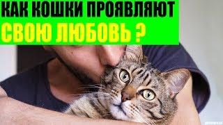 Как кошки проявляют свою любовь к хозяину?