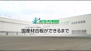 秋田プライウッド企業紹介 ④国産材合板ができるまで