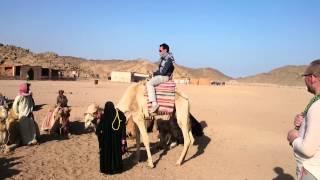 Как садится верблюд (16+)