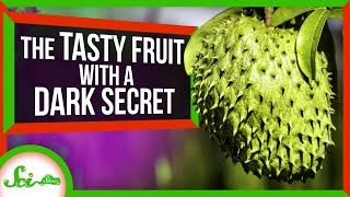 This Fruit Could Treat Parkinson's... Even Though It Causes Parkinson's Symptoms