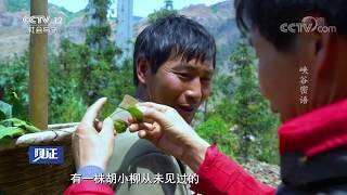 《见证》 20190705 守护秘境·北盘江大峡谷(一)峡谷密语| CCTV社会与法