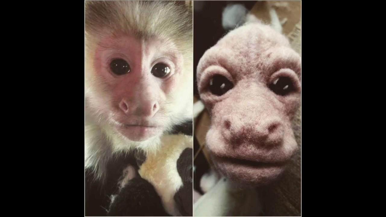 Needle Felted Capuchin Monkey - Pockets Warhol