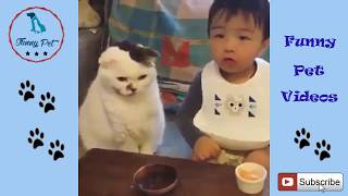 Funny Cat Videos For Kids ✅ Funny Baby And Cats ✅ Funny And Cute Cats Compilation