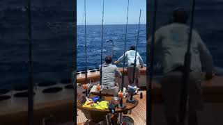 2020 Bisbee's East Cape Offshore | Hooray  | Striped Marlin