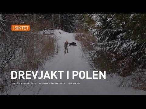 Drevjakt i Polen
