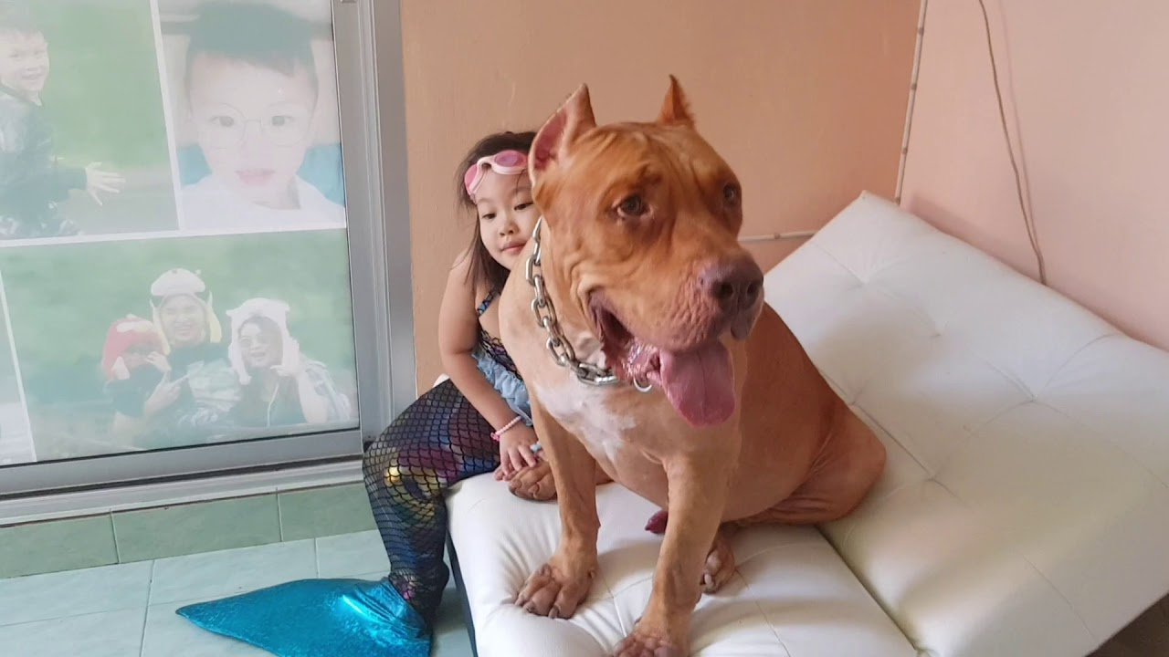 เจ้าสัว 3 ขวบแล้วคราฟ โตได้กว่านี้อีก ติดตามเรื่องราว น้องหมาน่ารักได้ที่ ช่อง ตูบทีวี