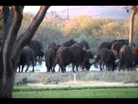 Africa Geographic Art Safari 2011