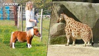 11 Animales enanos que te harán amar más la naturaleza
