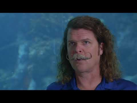 The Vanishing Reef: Short Documentary