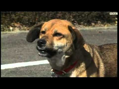 Tsunami dog reunited with owner in Japan.flv