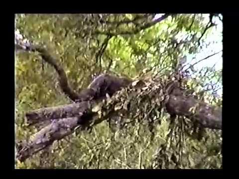 Tanzania Safari Movie - Part 2