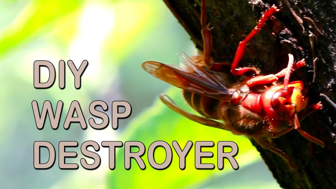 How to get rid of the wasp nest 55