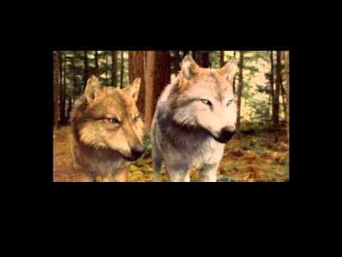 fotos de lobo con edward maya subtitulado