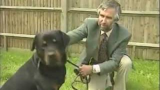 Adult Rottweiler - Training The Companion Dog 1  Socialization & Training