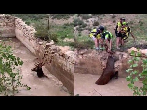 شاهد: دراجون ينقذون غزالا حاصرته المياه في إسبانيا  - نشر قبل 3 ساعة