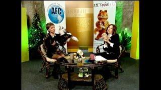 Скиф-той-боб самые маленькие кошки
