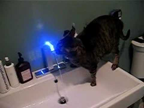 How To Make My Cat Stop Drinking From The Faucet