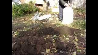 Укрытие на зиму молодого инжира(Укрытие на зиму молодого куста инжира сорта крымский черный., 2014-10-25T15:12:52.000Z)