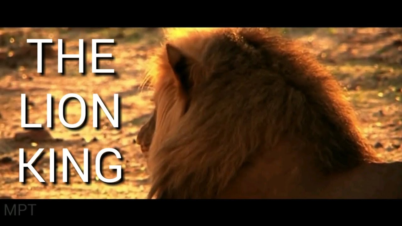 the lion king  2019  official trailer first look musical