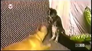 Repeat youtube video ultimate fails compilation of 2014 รวมความฮาฉบับหมาแมว ทะลึ่ง เจ็บตัว