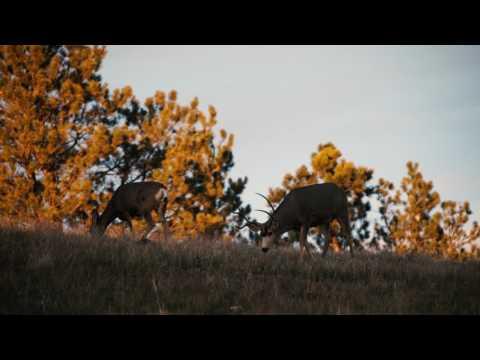 North American Wildlife Conservation Model - Tenet #1