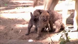 Zwierzęta świata - Najmłodsi w ZOO, cz. 9 (urywek) [TVP1 HD]