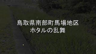 南部町でホタルといえば、金田地区が有名ですが、山田谷川流域もホタルが沢山飛びます。 特に手を加えた訳ではなく、自然増殖のようです。 2016.5.28の撮影です。