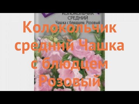 Колокольчик средний Чашка с блюдцем Розовый �� обзор: как сажать, семена колокольчика