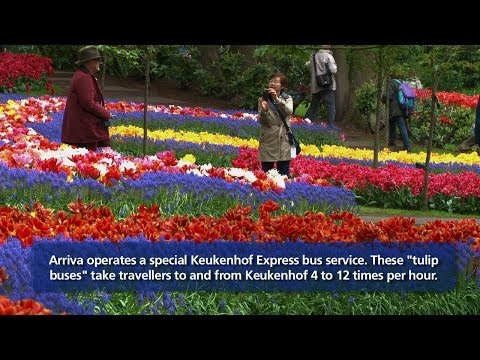 Special buses from Schiphol to Keukenhof