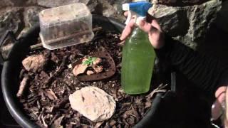 Fertilizante e insecticida natural casero.