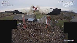 Kamera IP: Gniazdo Bocianie pod Sokółką [NA ŻYWO] | IP Camera: Stork's nest [LIVE]