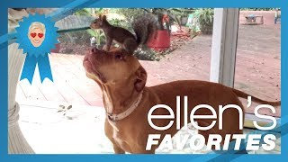 Ellen's Favorite Animal BFFs