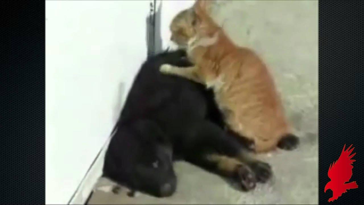 Youtube Cat Massages Dog