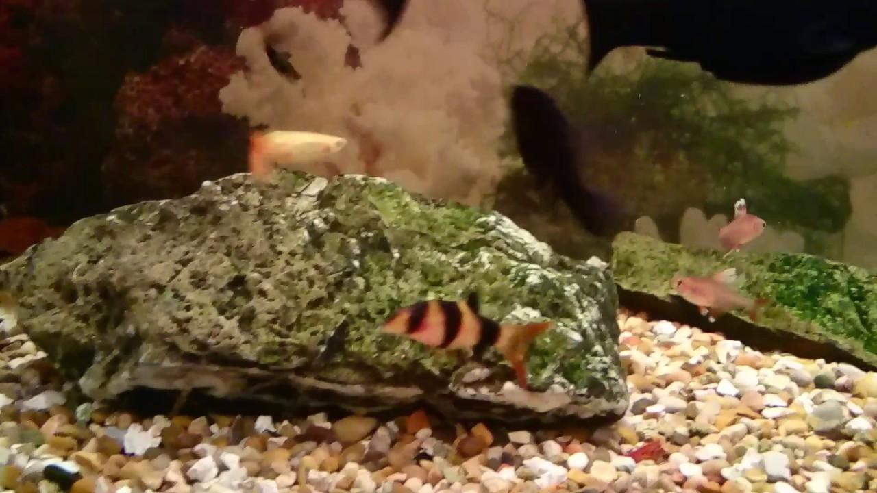 Aquarium fish dying new tank - My New Fish For My Tank After Dead Fish Michael Aquarium