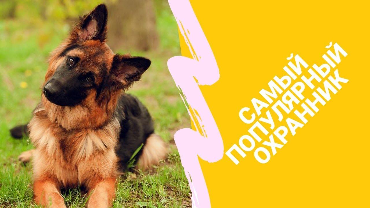 Самая популярная собака /// Охранник ///Верный друг ...