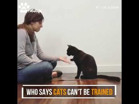 A school who provide training to cats