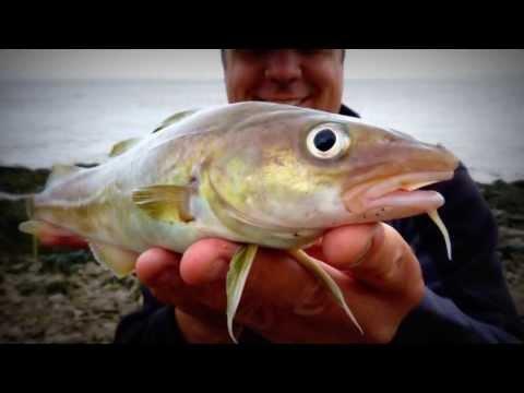 Fishing With Albert (Portishead Steamer Pier) Gopro Hero 3 (8)
