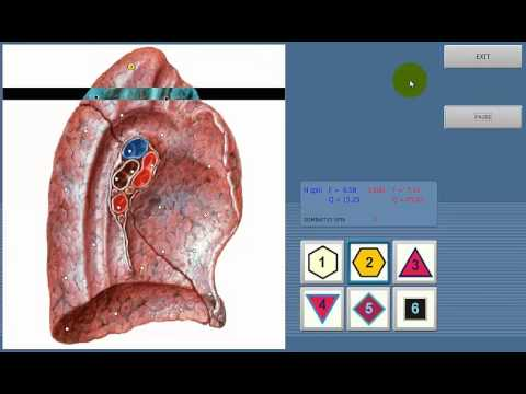8D NLS health analyzer Vector software Instructions