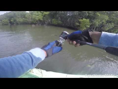 Casting Tarpon Di Sungai Merbok