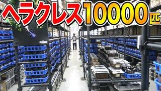 【年間5000ペア】世界最大のカブトムシを輩出する特大ブリードルームで誰も予想できない出来事が